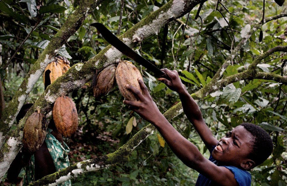 chocolate-brands-dont-use-childlabor-gourmandesante