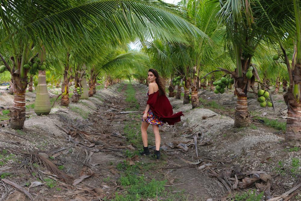 https://lisanna-wallance.squarespace.com/coconut-oil-health-benefits-2-1/