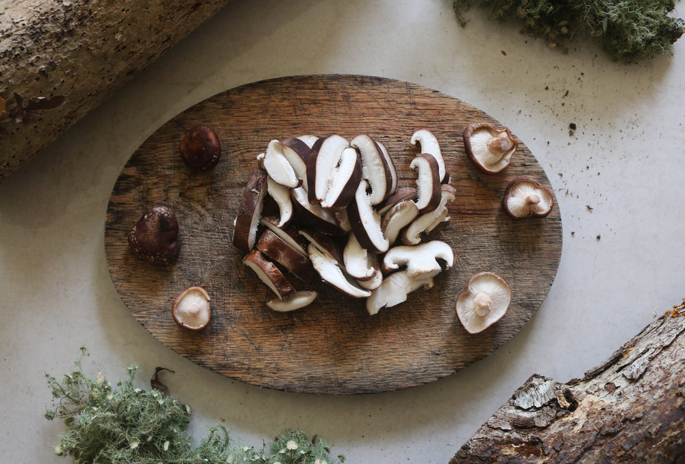 Marthasvineyard-mycological-shiitake-culinarywitch