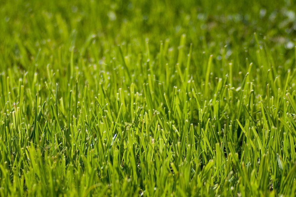 California Moves, Haltingly, Toward a Post-Lawn Future -