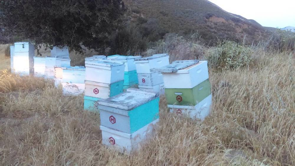Beehive boxes owned and operated by Meadiocrity Mead in San Diego countryside