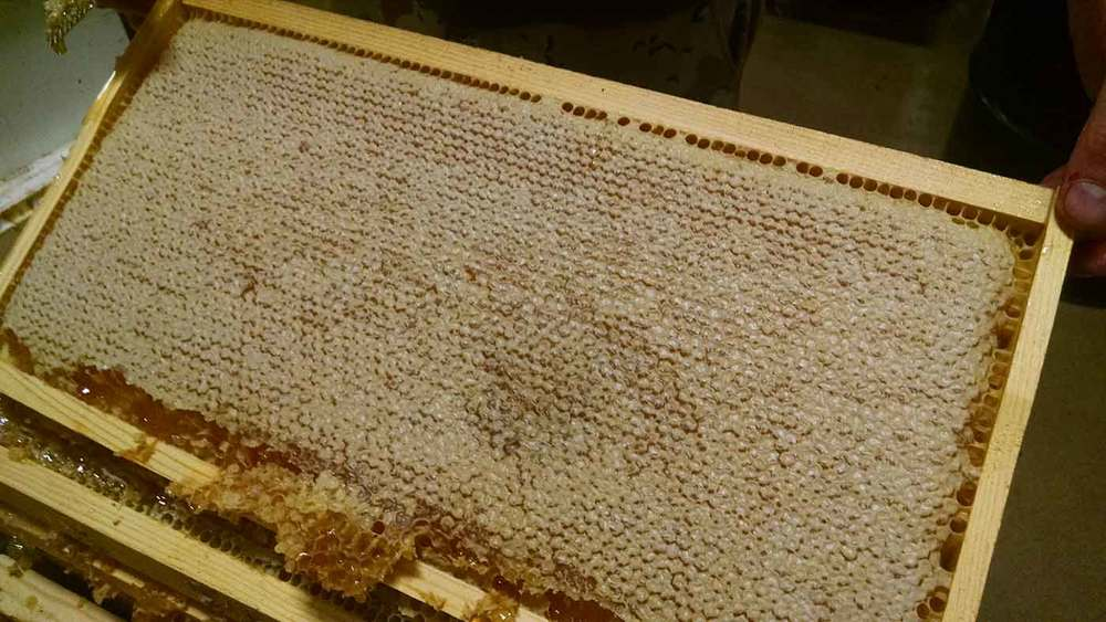Capped honey from our estate hives. This frame contains delicious San Diego mountain honey that we'll be using in our 2017 Summit mead!