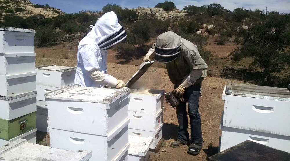 Meaderies have the chance to buy honey in bulk directly from local beekeepers to obtain higher quality honey while providing more incentive for beekeepers to prioritize honey-making activities for their bees.