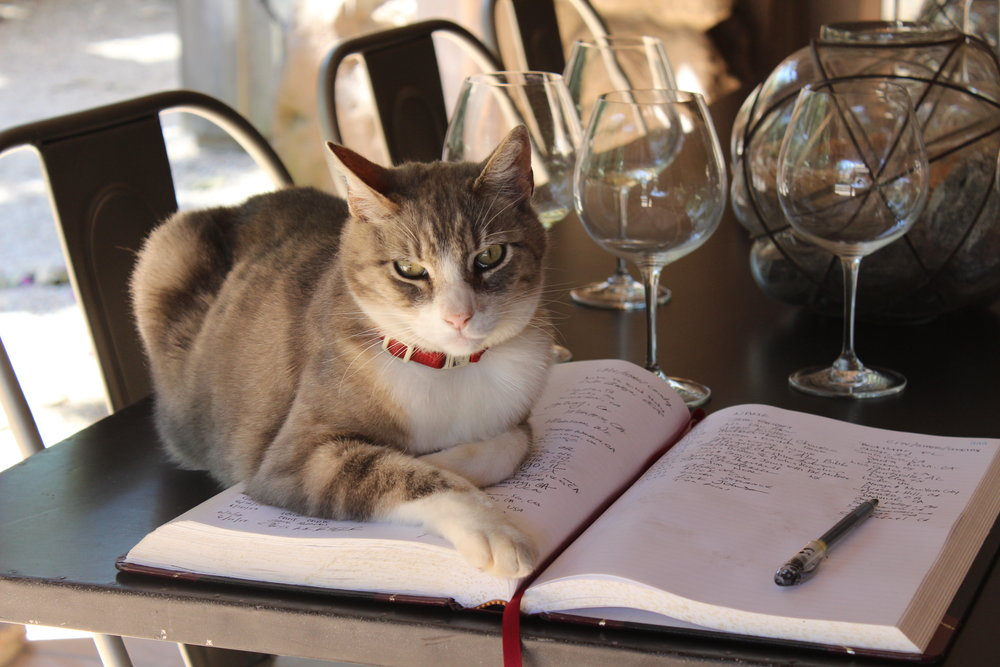 cat-on-reservation-book-overseeing-napa-wine-tour