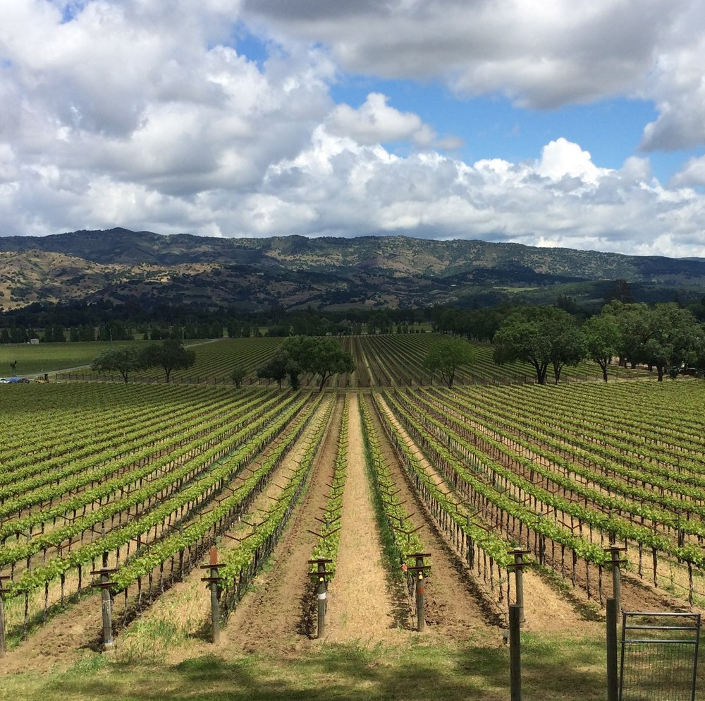 California Dreamin': How To Be Surprised And Seduced By Napa Valley
