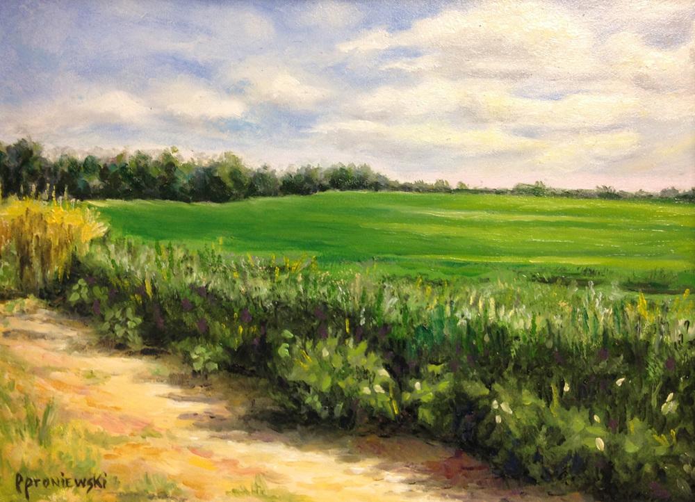 Summer Soybean Field