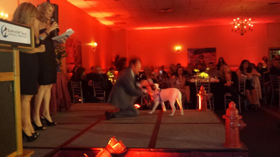 "February 2015: Watchdog Mary co-hosted the ""Survivor Tails Rescue"" annual benefit."