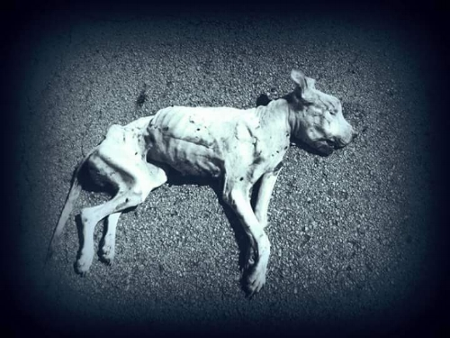 Another dead dog found along Dowdy Ferry Road.