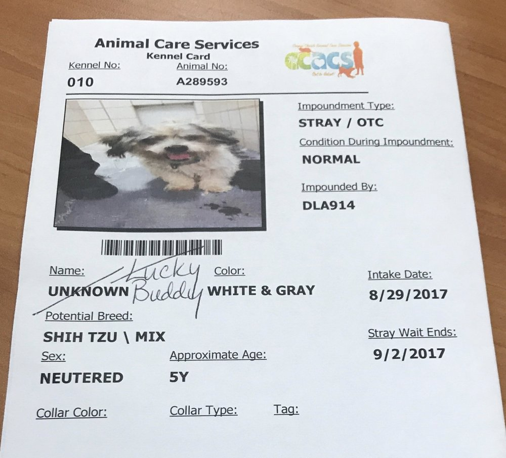 Buddy's intake sheet from the shelter