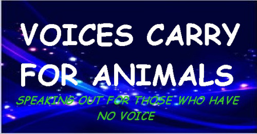 November 28, 2017: Voices Carry for Animals radio show guest - Watchdog Mary discussed lessons learned after the hurricanes, and what pet owners and communities can do to prepare should devastating storms, floods and fires strike again. To listen to a podcast of the show click here.