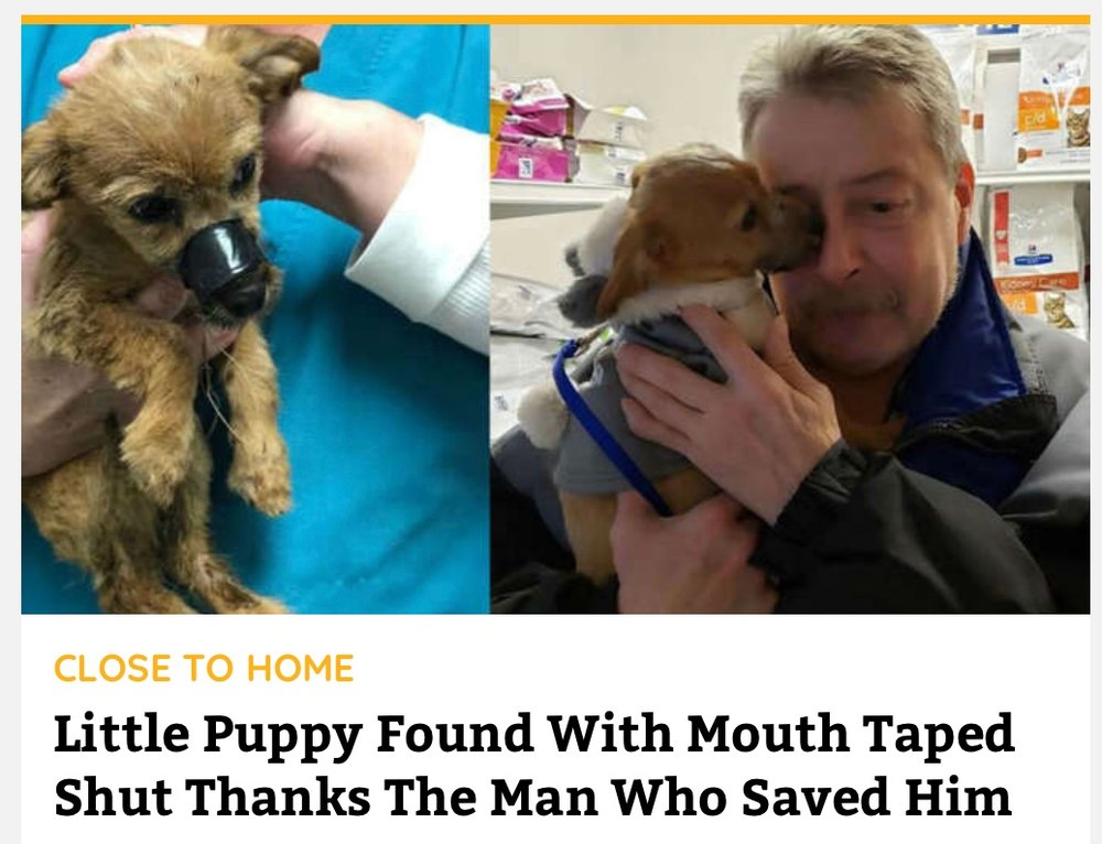 IN pup saved
