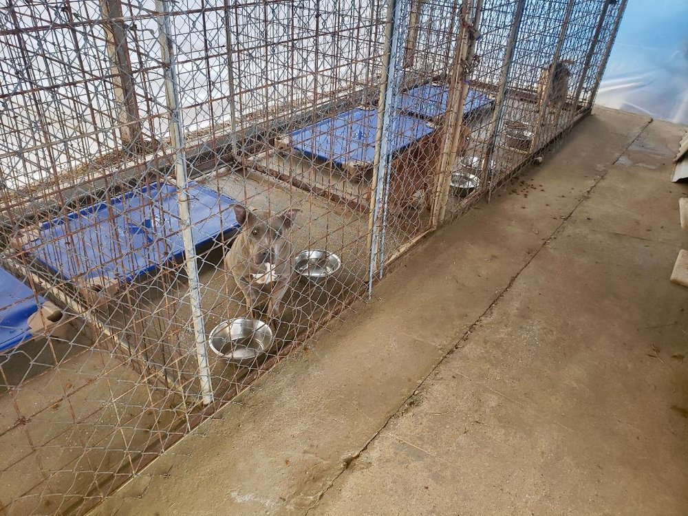 Dogs currently in the San Jacinto County animal shelter in Texas