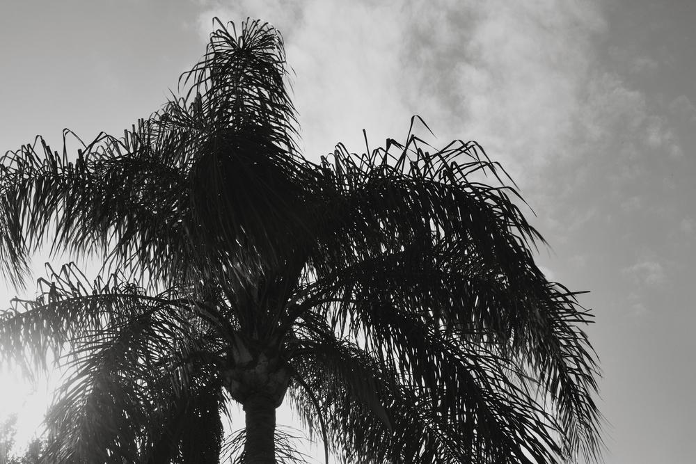 Tree 1.9.16.jpg