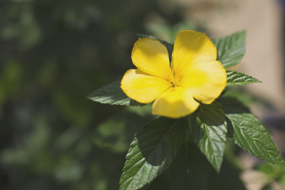 Blooms4.jpg