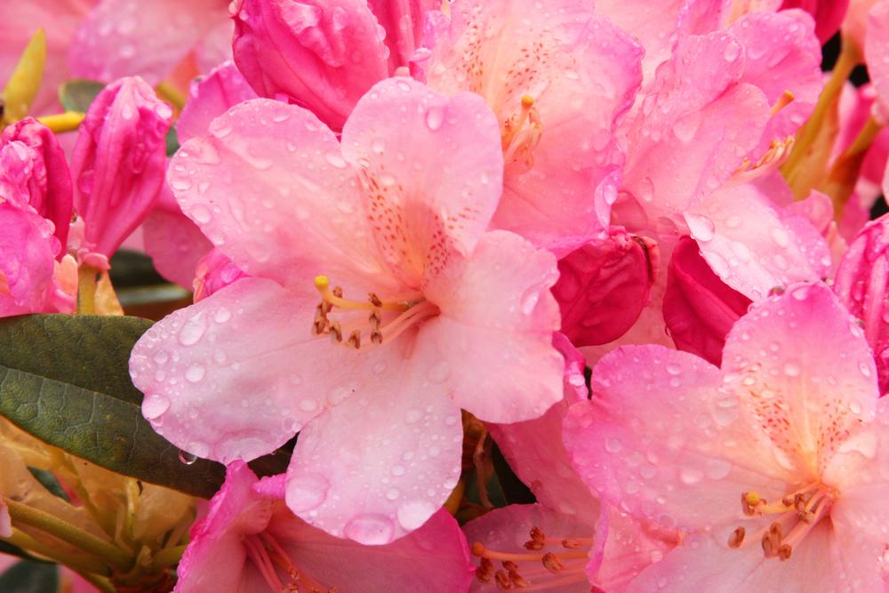 Snowqualmie Flowers.jpg