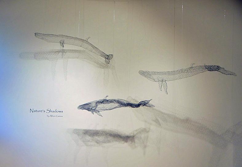 10 Whale (1).jpg