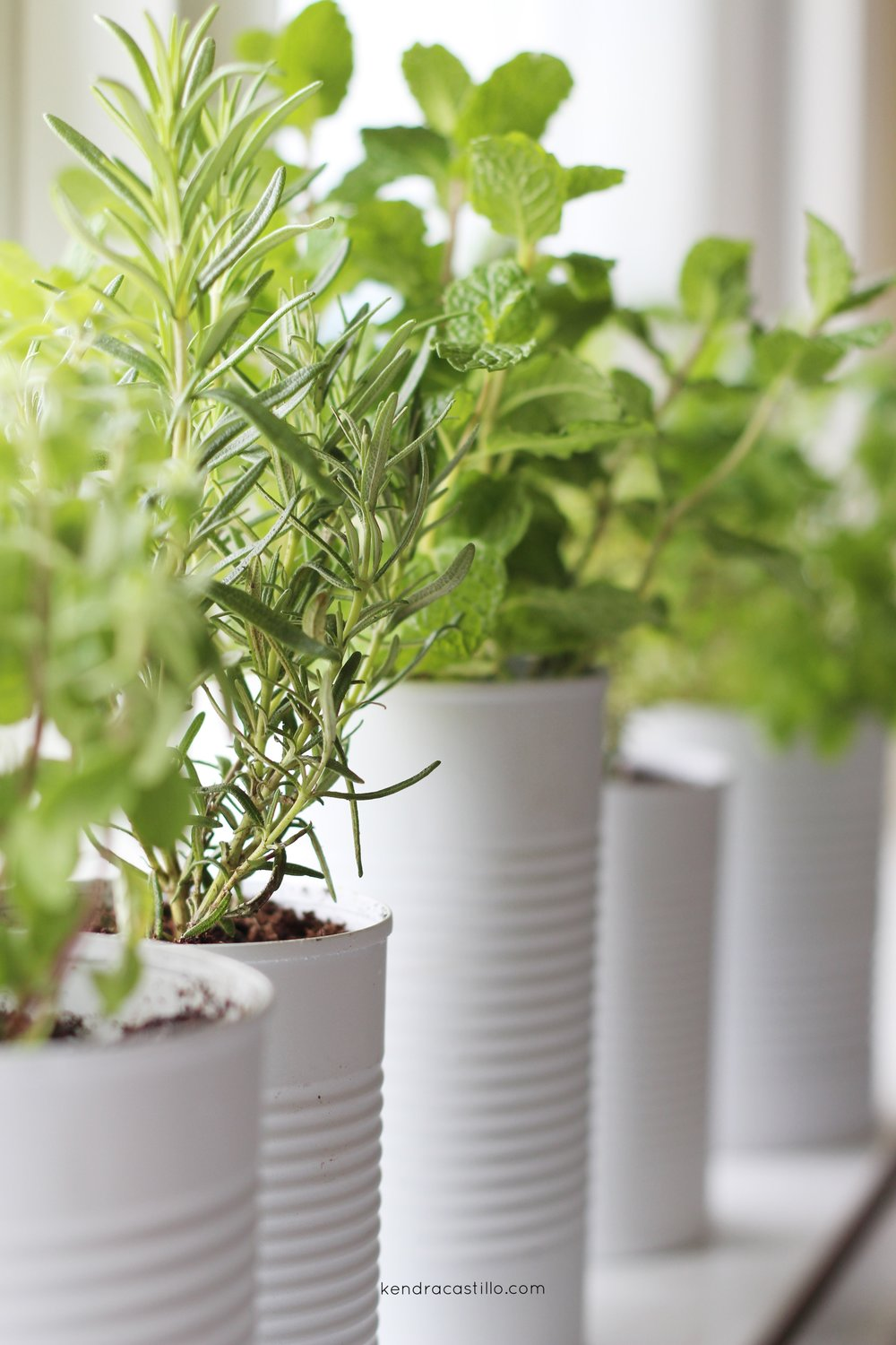 Window Sill Herb Garden for you Kitchen or small spaces | Kendra Castillo