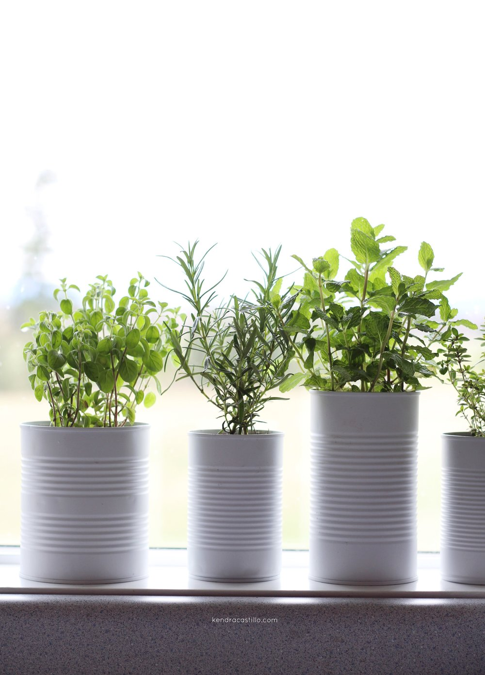 Simple Herb Garden for you home, DIY steps linked | Kendra Castillo