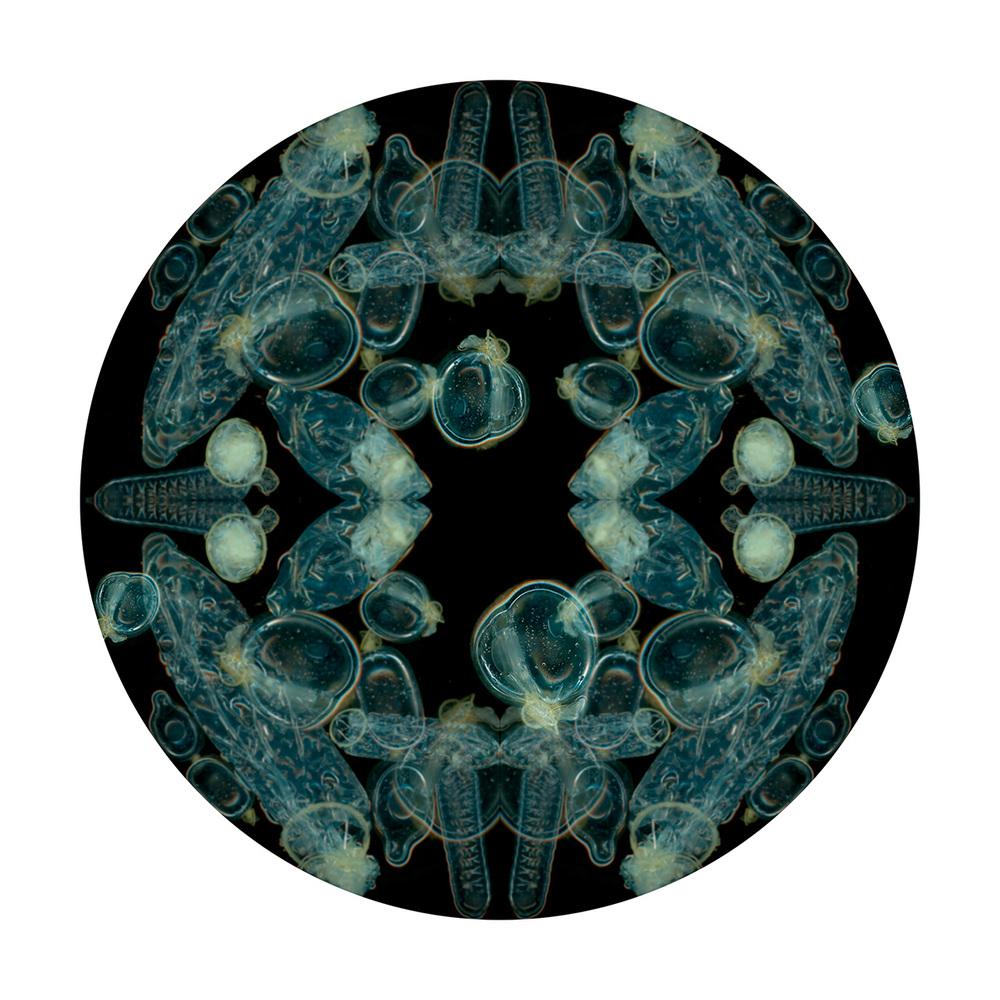 petri1 (1).jpg