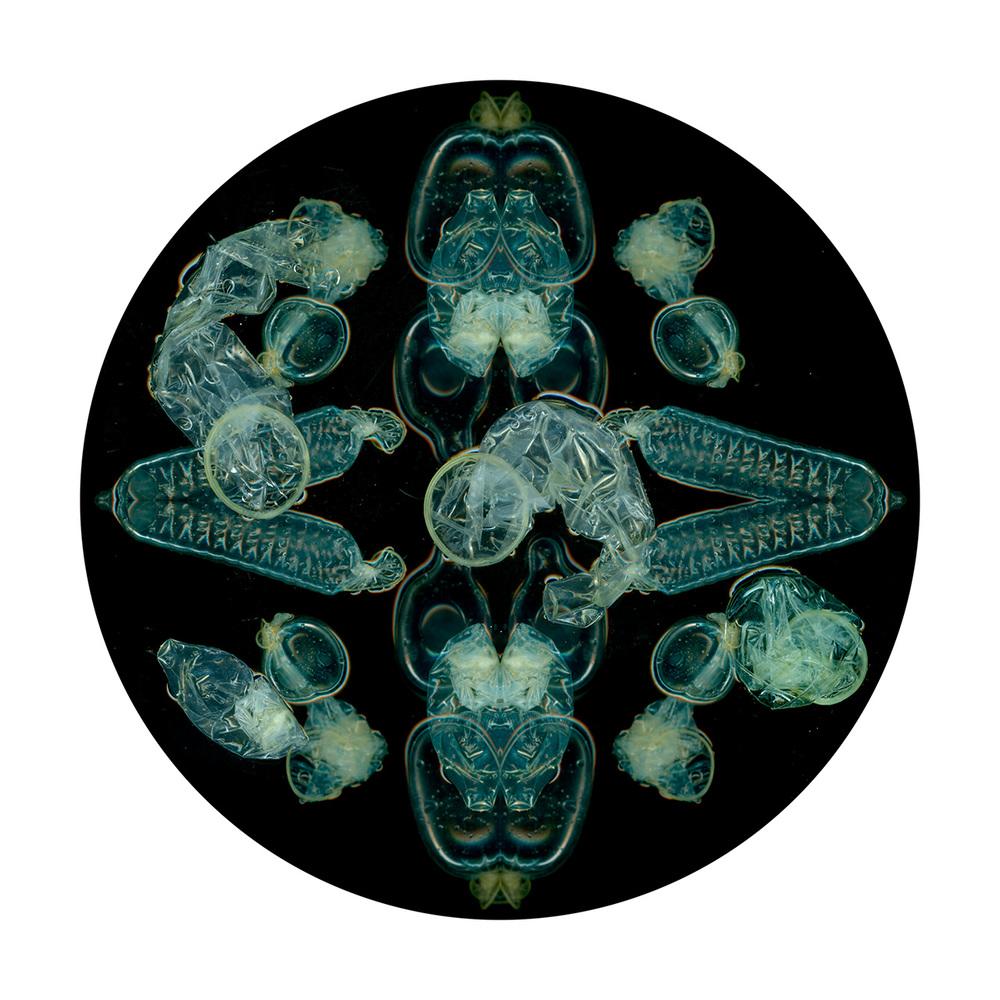 petri2 (1).jpg