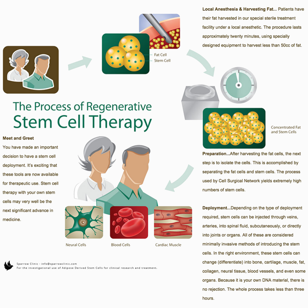 The Process of Regenerative Stem Cell Therapy.png