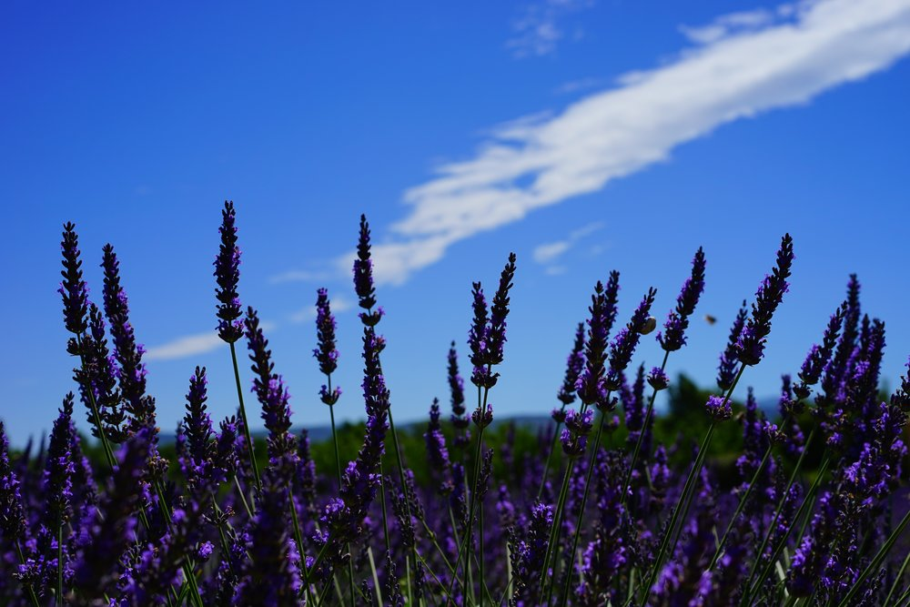 Swiss Insurance Covers Complementary Therapies - by Rebecca Rogers