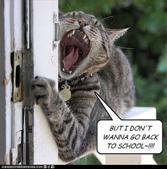 catschool