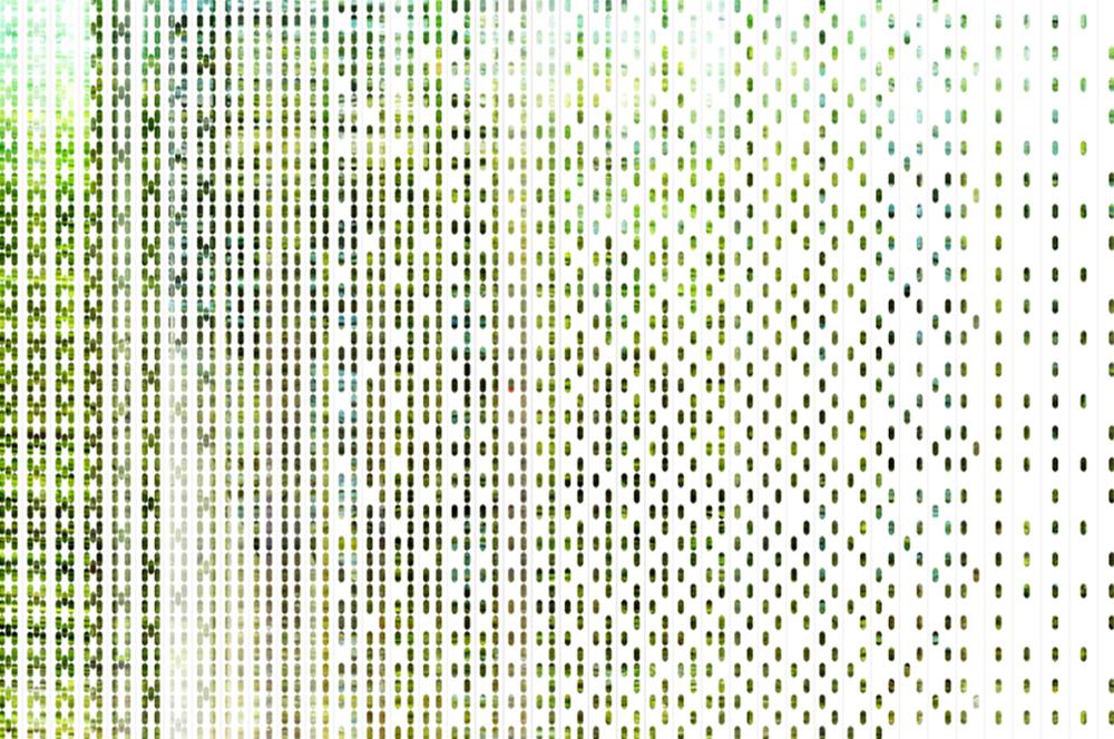 Computation Garden