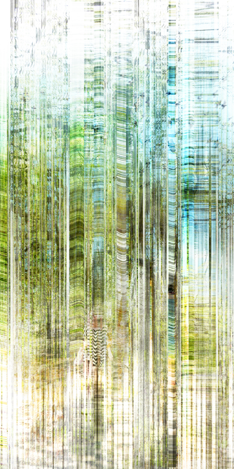 Forest Layer 2
