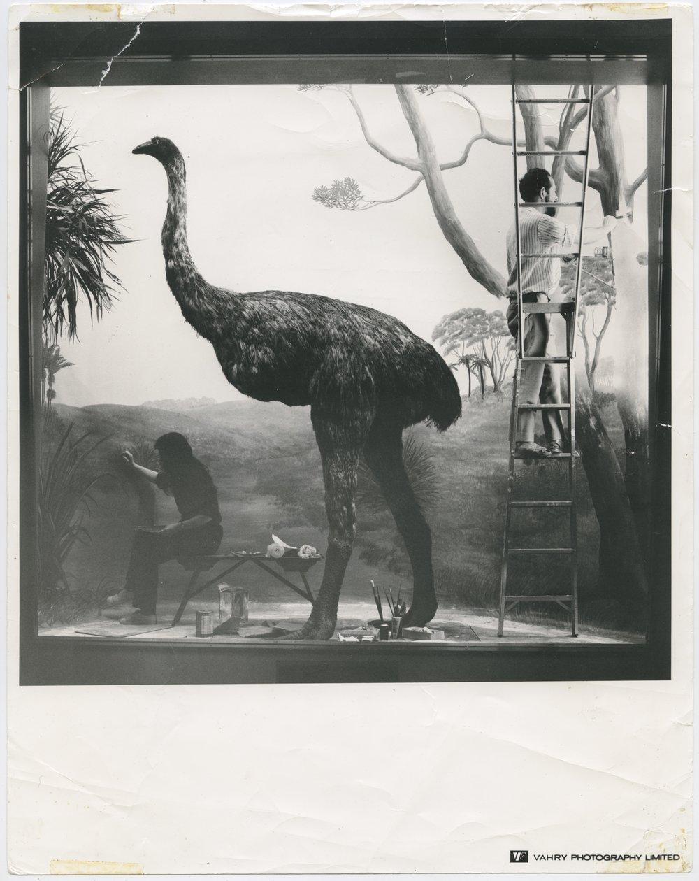 Work in progress on the new Hall of New Zealand, 1972. Auckland War Memorial Museum Tāmaki Paenga Hira