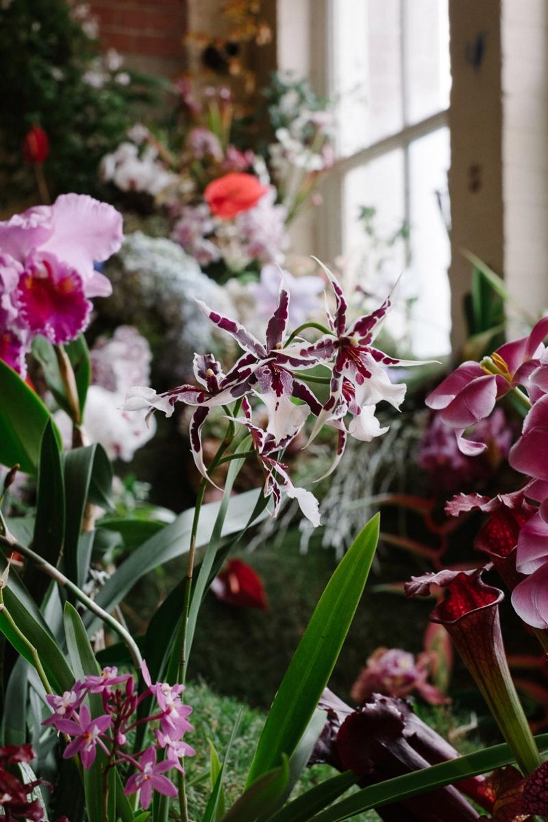 Flowering_Now-26.jpg