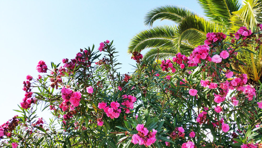 soi55_lifestyle_travel_lagos_portugal_palm_trees_and_flowers