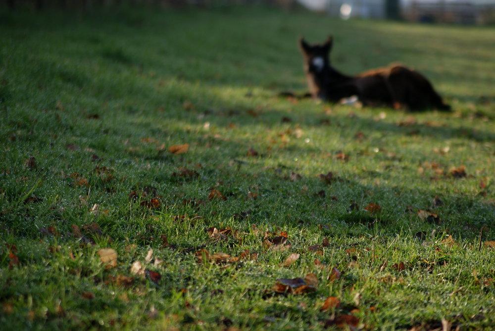Ze toont parels in het gras