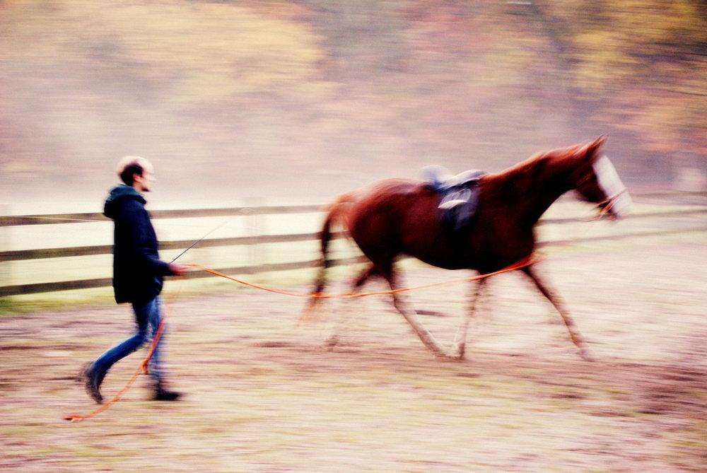 Voel het paard
