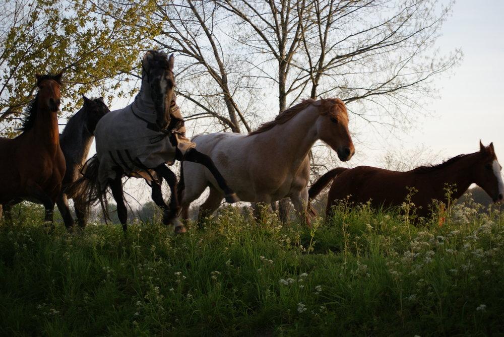 Paard uit EDEN
