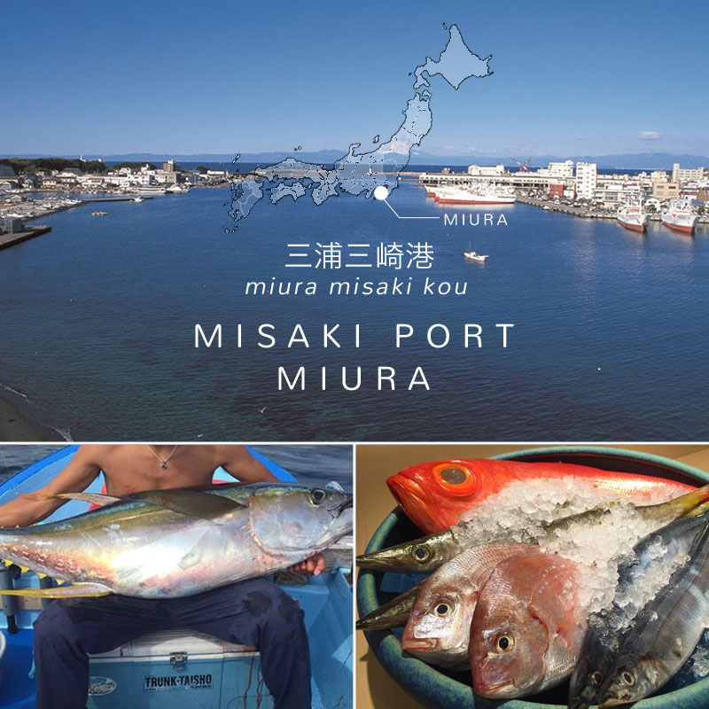 MaguroDonya Singapore | Misaki Port Miura