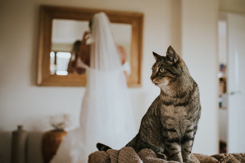 Cheshire Wedding Photojournalism - Cat watching the bride