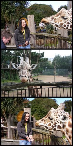giraffeBlack.jpg