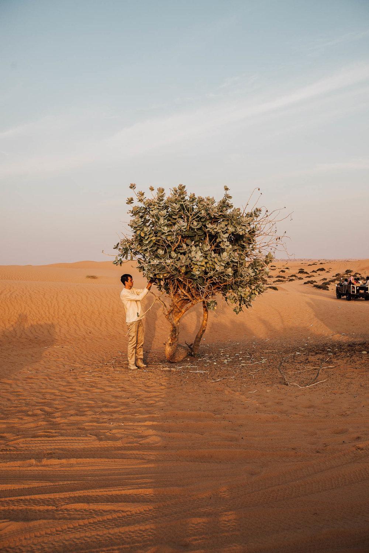 Dubai - Desert (1 of 1)-34.jpg