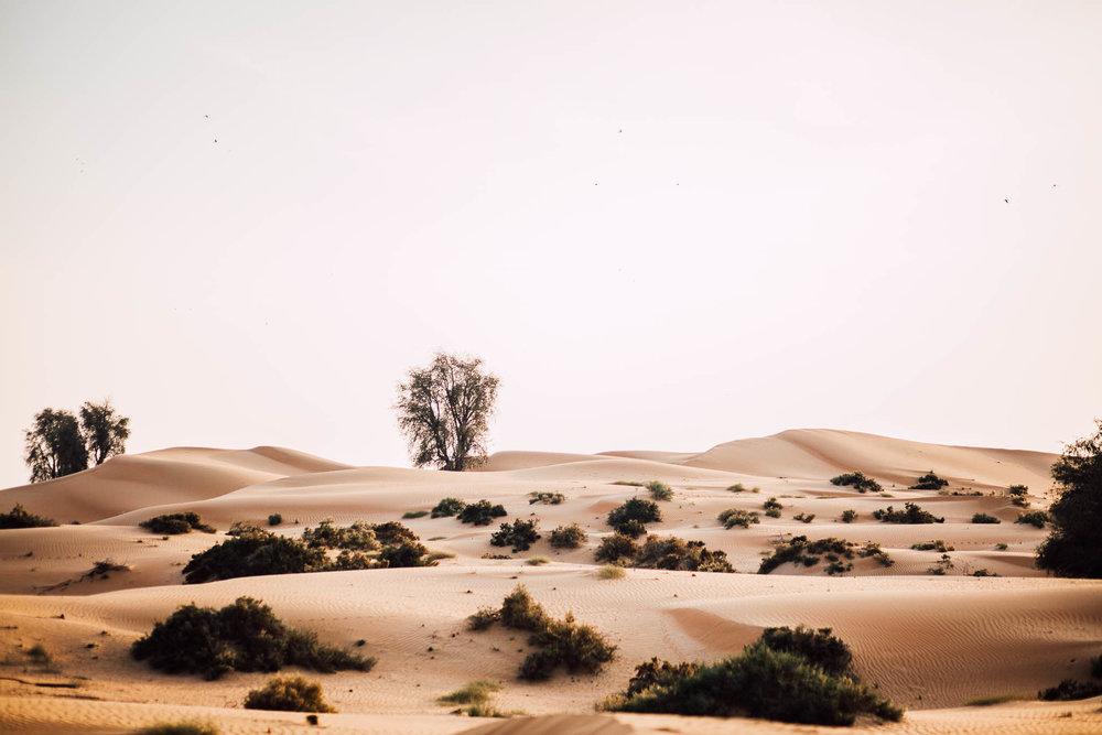 Dubai - Desert (1 of 1)-20.jpg