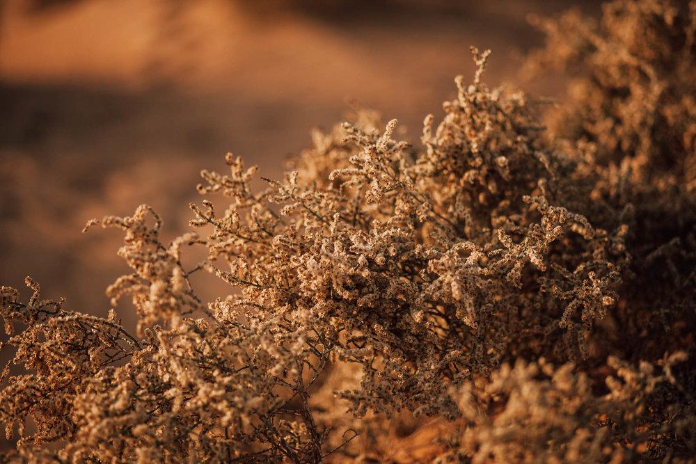 Dubai - Desert (1 of 1)-21.jpg