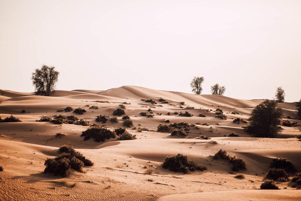 Dubai - Desert (1 of 1)-12.jpg