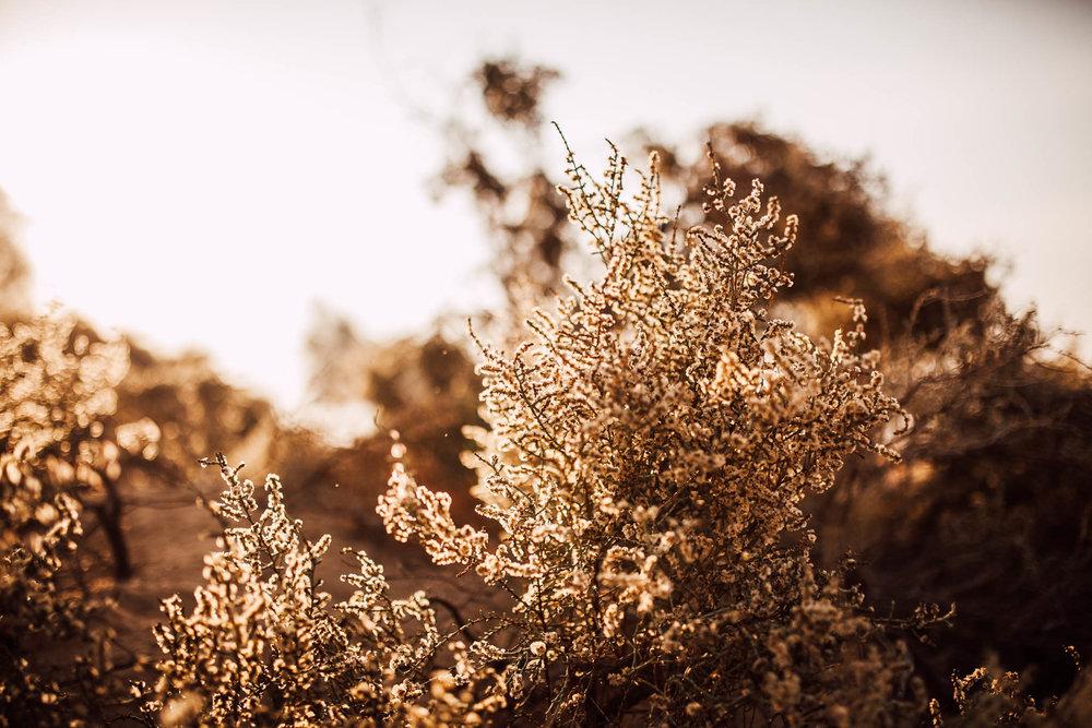 Dubai - Desert (1 of 1)-9.jpg