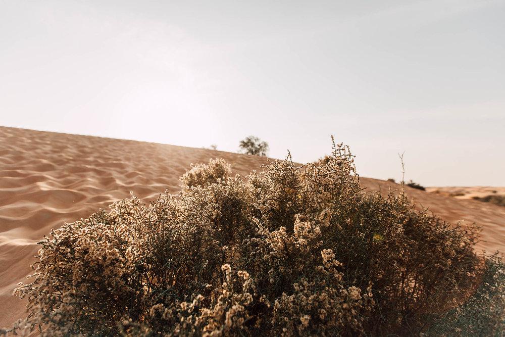Dubai - Desert (1 of 1)-7.jpg