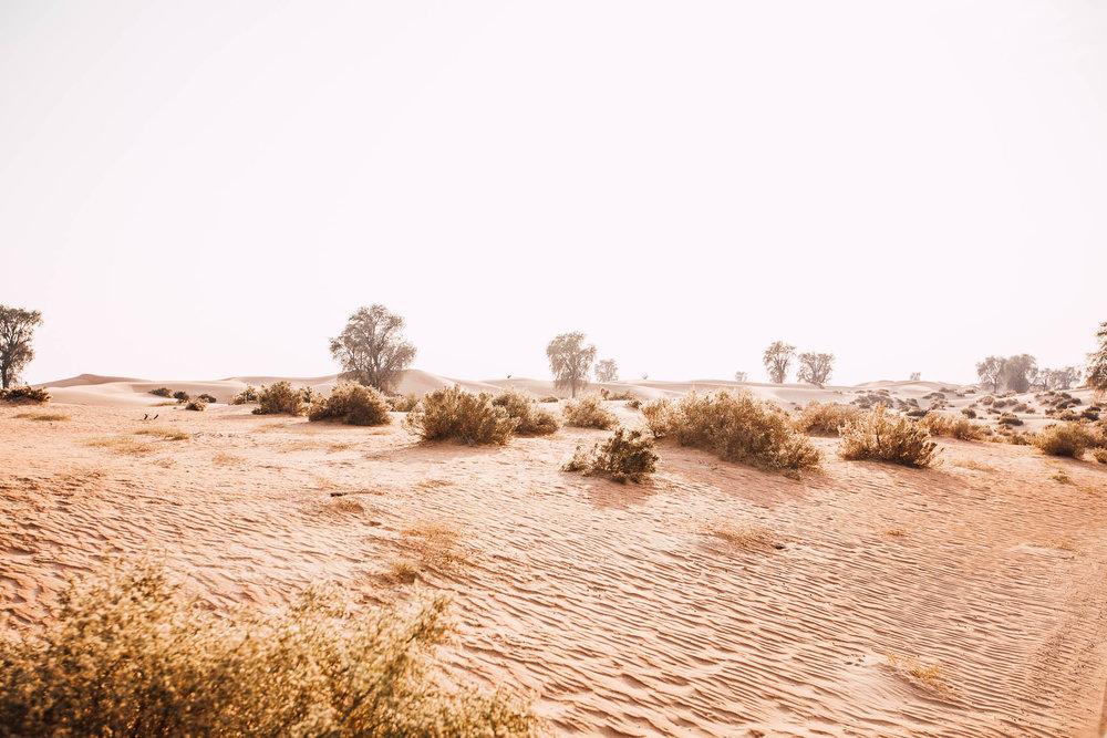 Dubai - Desert (1 of 1)-6.jpg