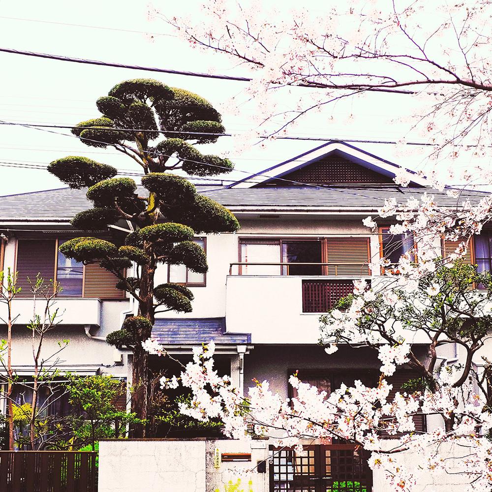 HouseSakura