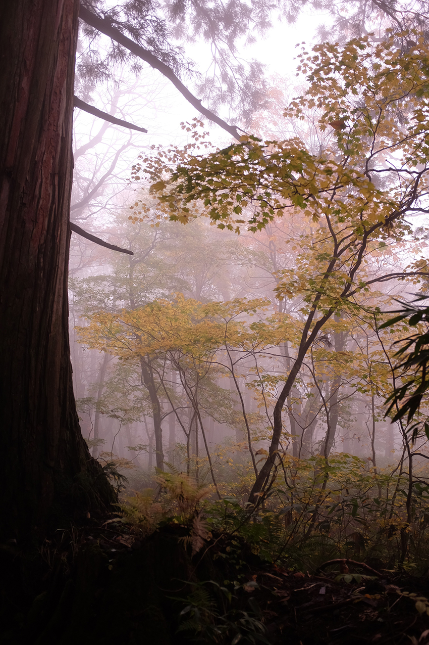 Misty Forest Hello Sandwich