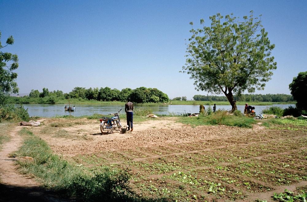 Berges du Fleuve Niger. Quartier de Magnambougou, Bamako, Mali.  La culture maraîchère à Bamako se développe sur les berges du fleuve Niger en milieu urbain.