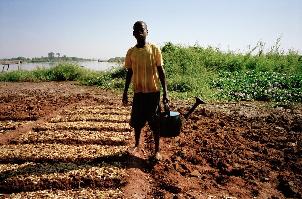Quartier de Magnambougou, Bamako, Mali.  Cultivateur le long du fleuve Niger. Les jeunes sont embauchés pour l'arrosage moyennant 7500 CFA par mois.  Durant la période d'hivernage cette parcelle située le long du fleuve est inondée par la crue. La culture de salade est en suspend durant cette période.