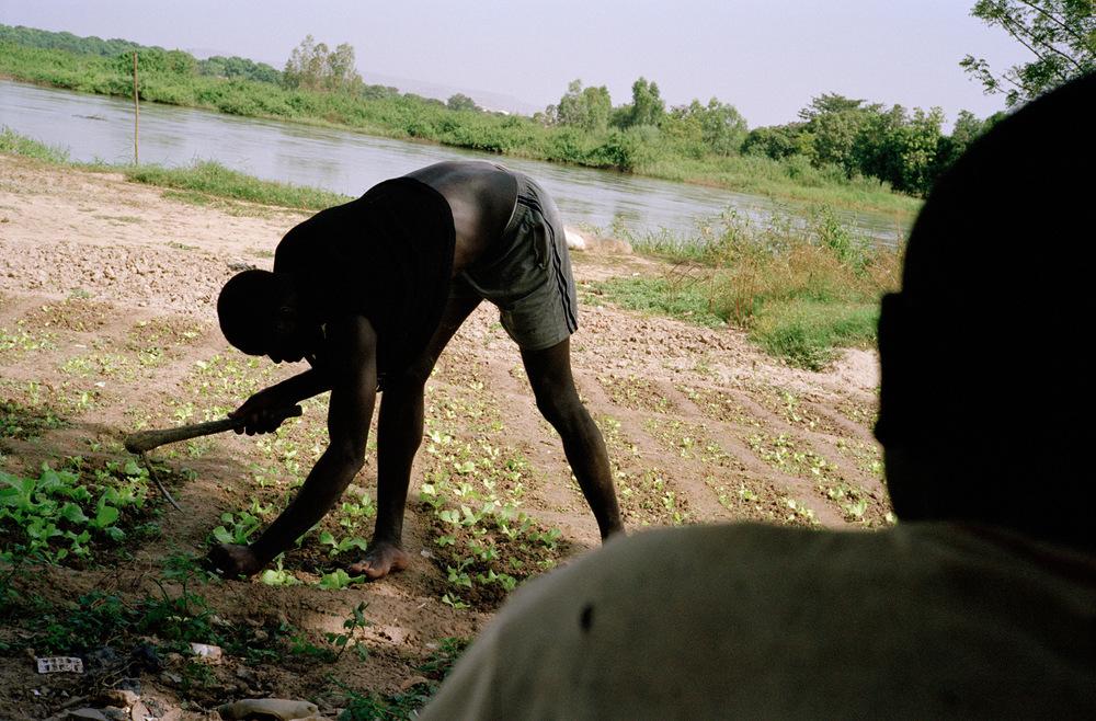 Quartier de Magnambougou, Bamako, Mali.  Les parcelles sont louées par des propriétaires particuliers, leurs prix varient en fonction de la superficie. Terre fertile, on peut y cultiver des tomates, des oignons, des betteraves, des salades et autres légumineuses.